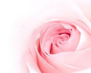 pink_roses_picture_166782