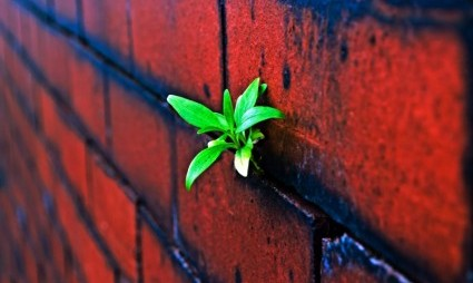 plant_on_the_brick_wall_206634